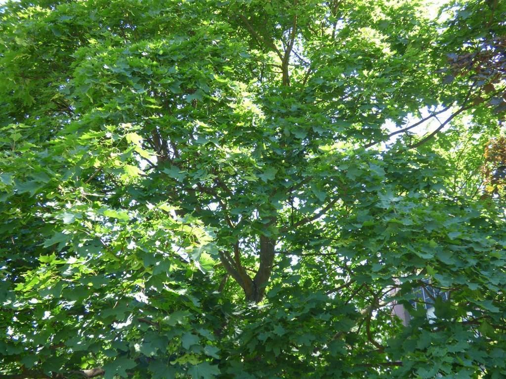 FOTO - Prodej lesního pozemku o velikosti 2903 m2.